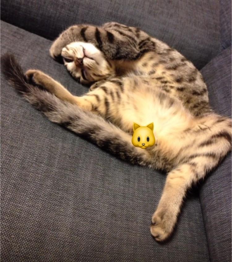 寝相の悪い猫写真