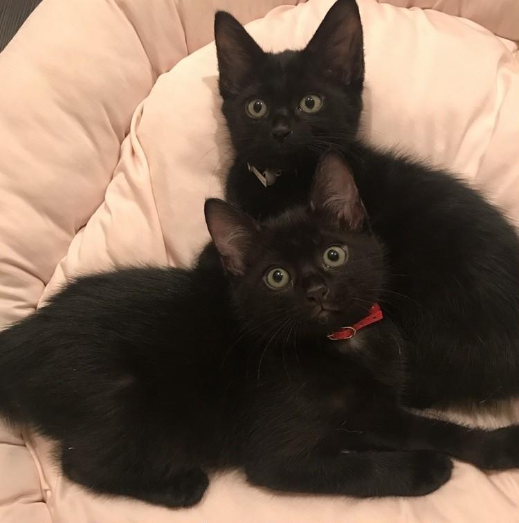 松島花さんの愛猫 『ゴメズ』と『フェスター』 幼少期