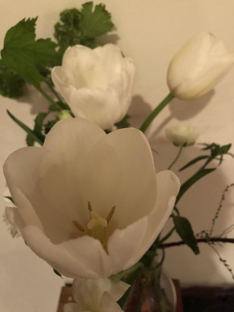 春が爆発! チューリップを愛でる日々【エディターのおうち私物vol.265】_1