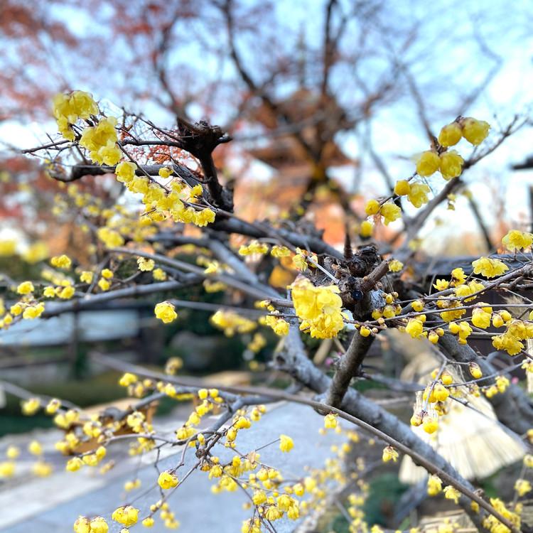 都内でプチ旅行気分♪江戸の風情溢れる上野東照宮で初詣!_10