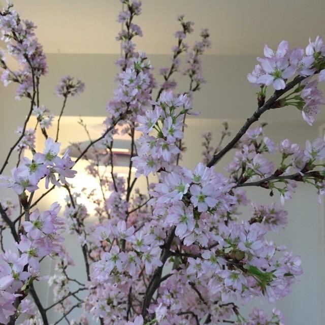 春はクラシックを聴きに上野へGO!「東京・春・音楽祭2017」_3
