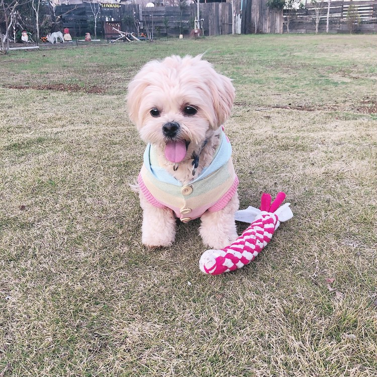 【貸切グランピンク】愛犬Birthday❤︎_12