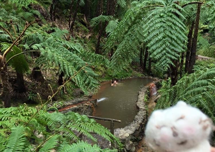 ジャングルの中の温泉♪_3