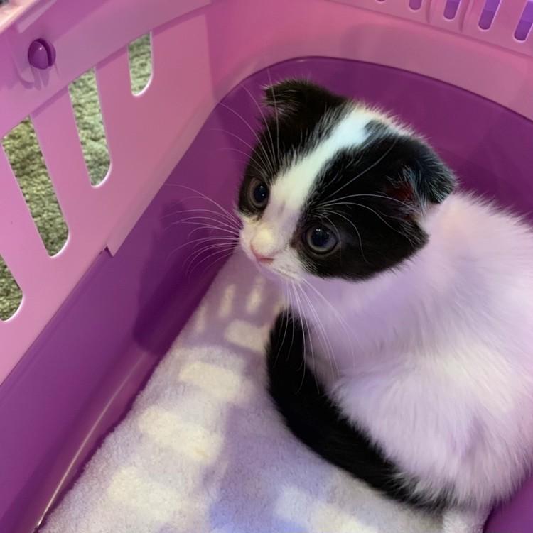ヘアメイクANNA.さんの愛猫 幼少期 来たばかりのころのお写真