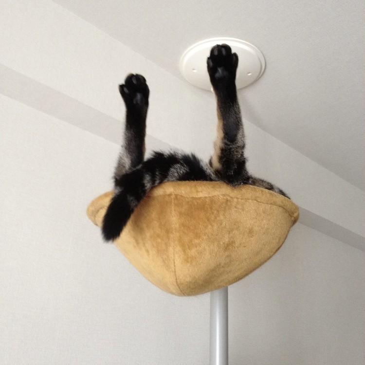 <写真>寝相のクセが強い、我が家の猫_5