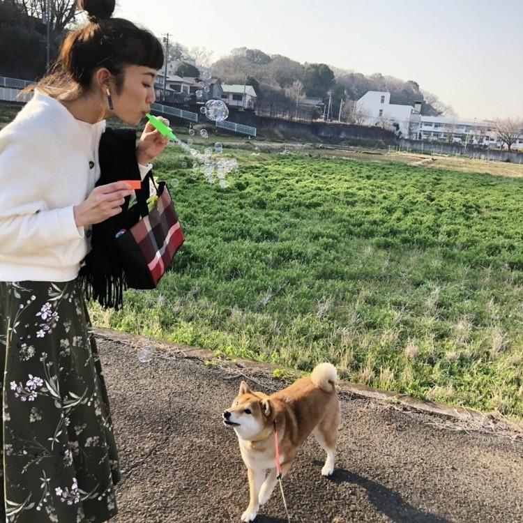 愛犬ナッツとお花見散歩♪_3