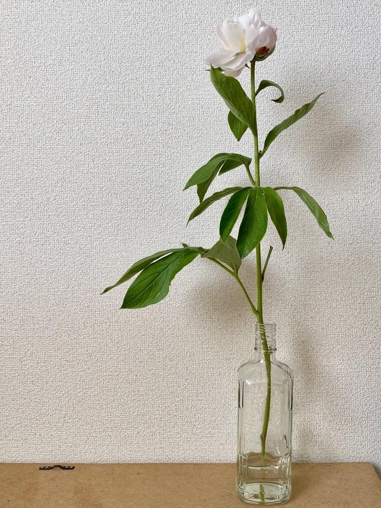 【エディターのおうち私物#24】生け花が意外とおしゃれに見える、空き瓶のリユース方法( #StayHomeWithFlowers )_4