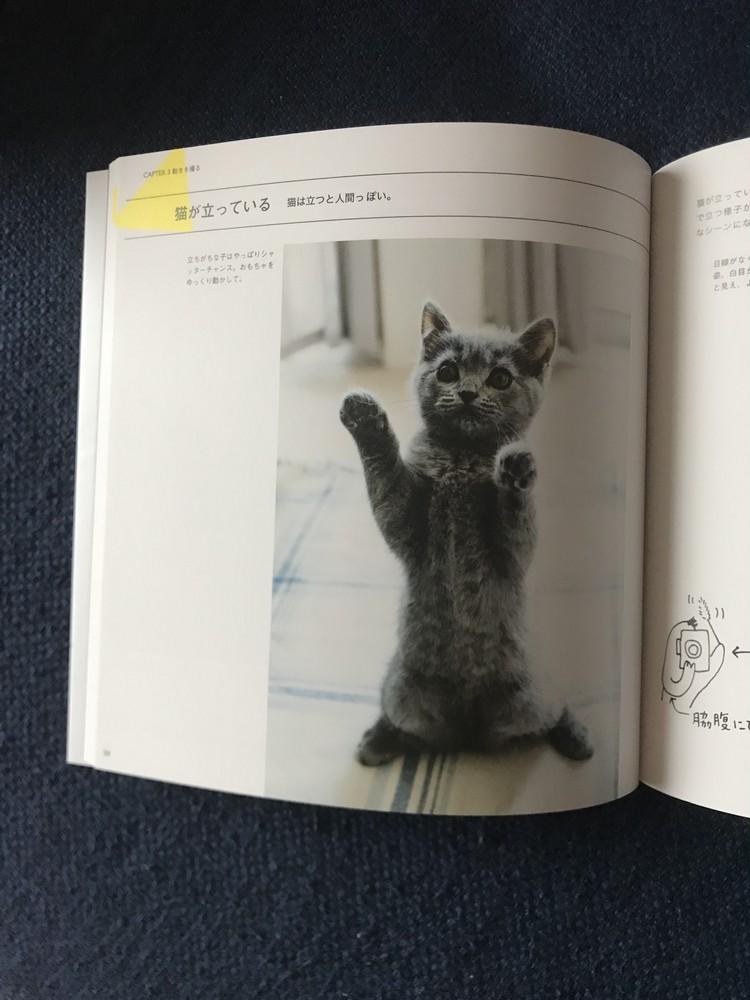 猫好きカメラマンによる、愛溢れる「猫写真の撮り方」に癒される♡_2_1