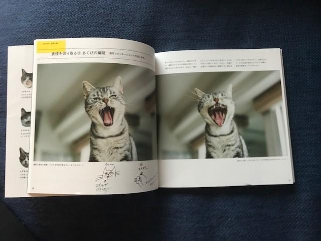猫好きカメラマンによる、愛溢れる「猫写真の撮り方」に癒される♡_2_3