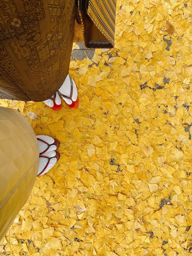 今年初めての着物。白大島を着て神社参りへ_3