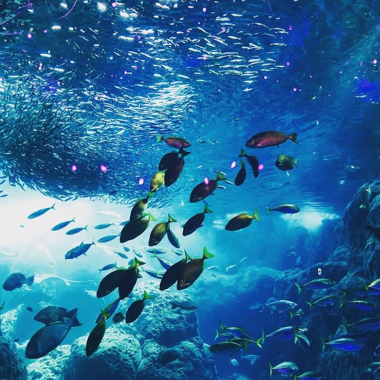 夏は涼しい新江ノ島水族館へ!_1