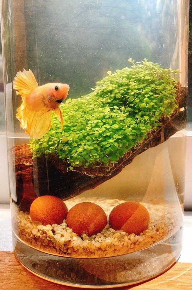 アクアリウム生活!熱帯魚飼い始めました。_5