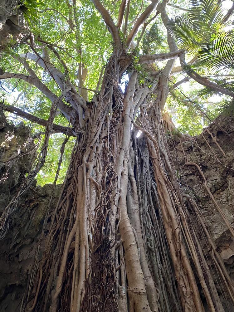 【沖縄旅行記②】唯一の観光は、ガンガラーの谷へ。_5