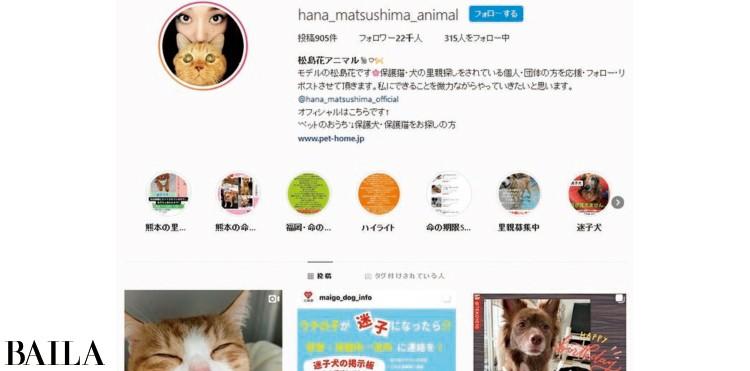 【身近な社会貢献】モデル・松島花が行う「SNSを使って動物の命を救う保護活動支援」_1