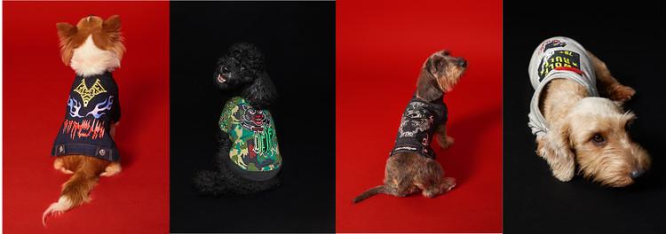 【DIESELから初のドッグウェアコレクションが登場】クールなエッセンスを愛犬にも♡_1