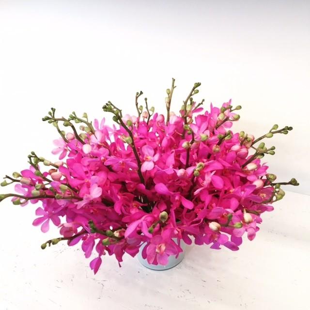 ファッション業界でいま大人気!【ディリジェンスパーラー】の花に注目!_3