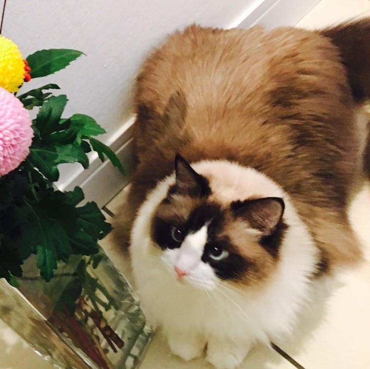 ライター道端舞子さんの愛猫