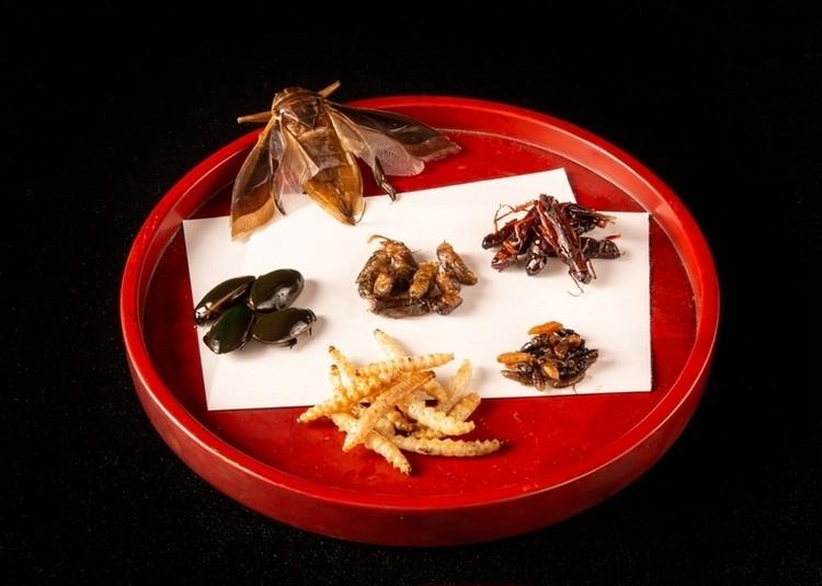新作「コオロギせんべい」公式ECで先行発売スタート!【無印良品】超スーパーフード「昆虫食」が今おすすめな理由_4