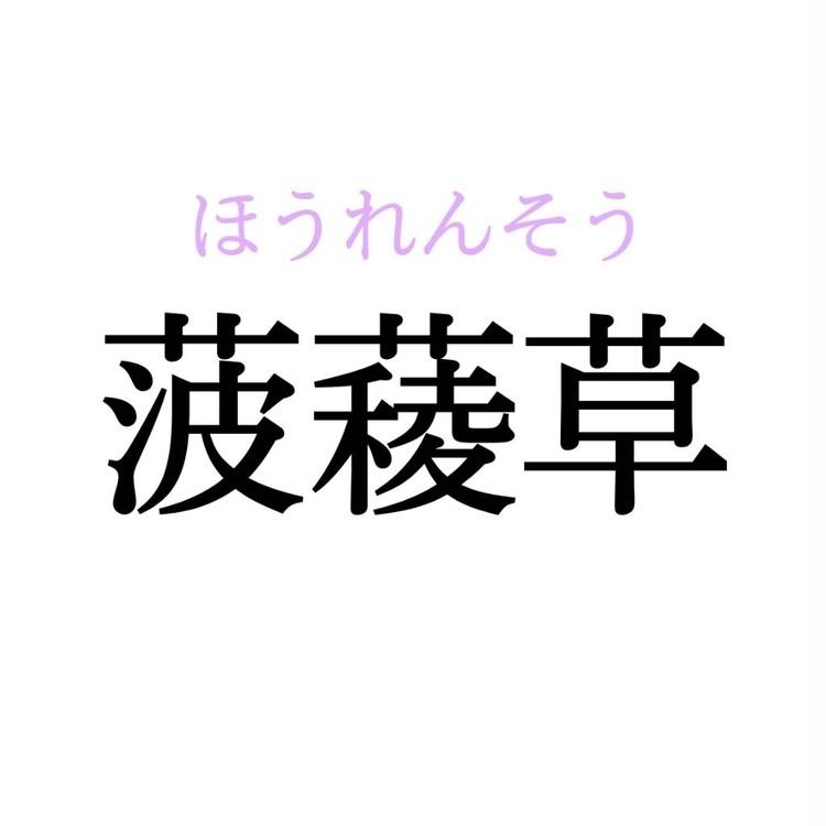 菠薐草 読み方