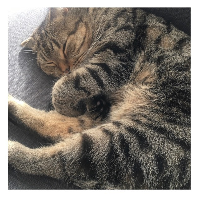 【エディターのおうち私物#68】癒される!「気持ちよさそうな熟睡猫」_1