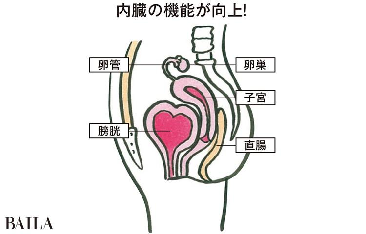 内臓の機能が向上!
