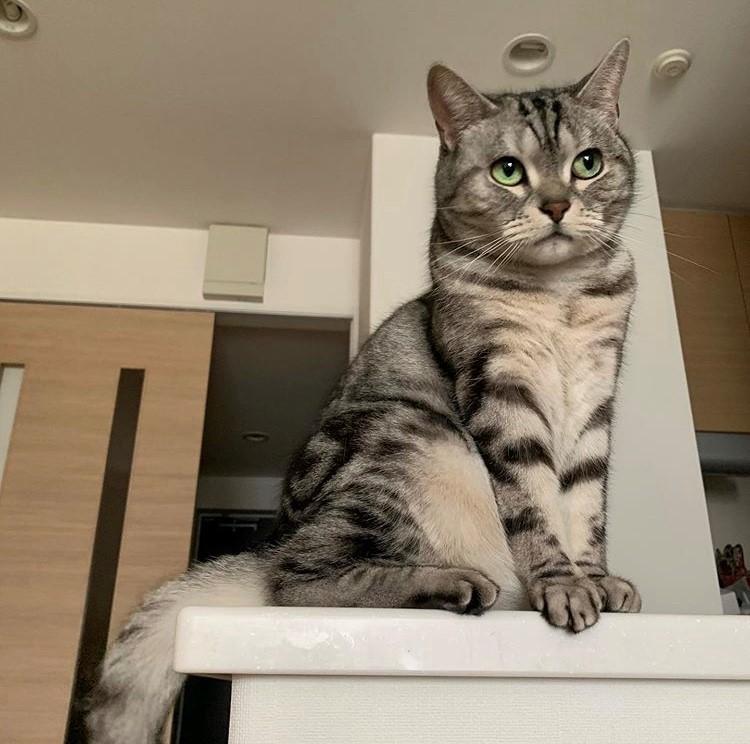 ヨンア マネージャー 後藤さんの愛猫
