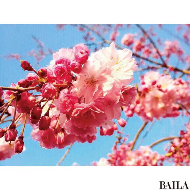 春色づかいでインスタ映え♡ 読者モデルズ【お花見女子会】5CD_1