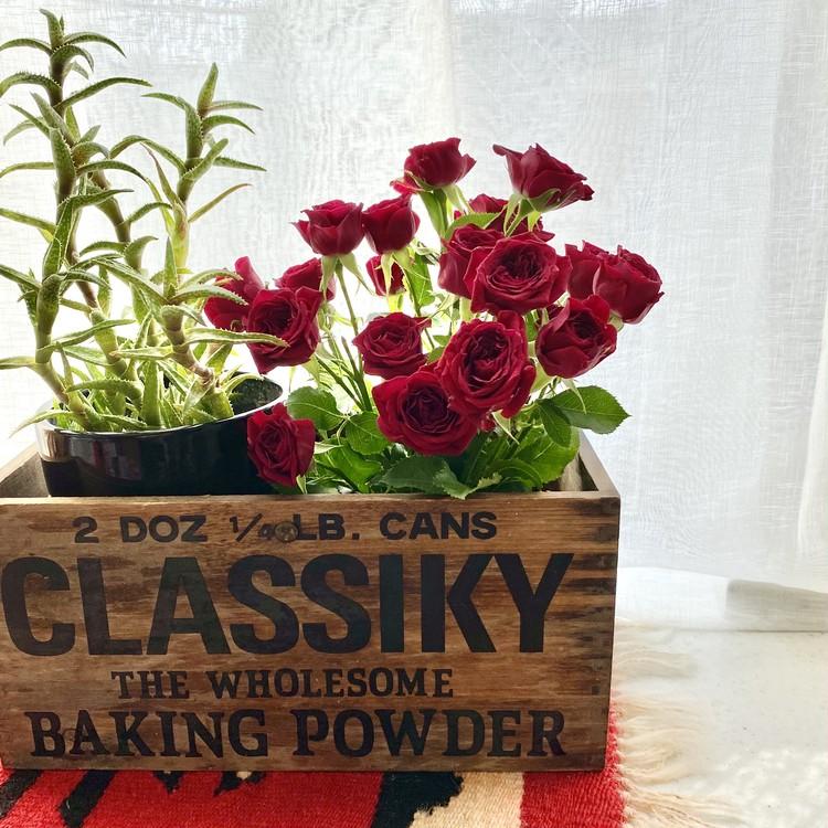 【エディターのおうち私物#36】1束¥390「ユニクロ(UNIQLO)」新オープンの原宿店やUNIQLO PARKで花やグリーンの販売をスタート!_8