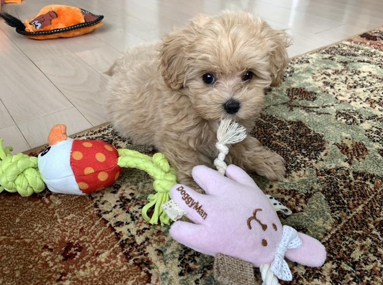 有末麻祐子さんの愛犬 おもちゃと