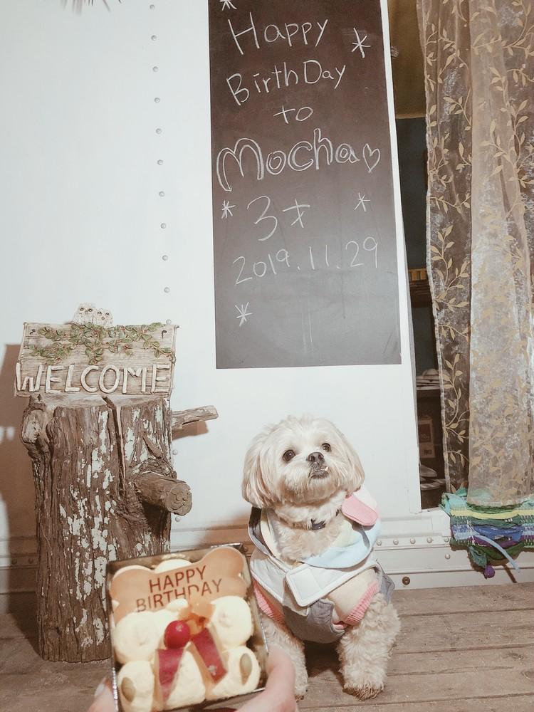 【貸切グランピンク】愛犬Birthday❤︎_6