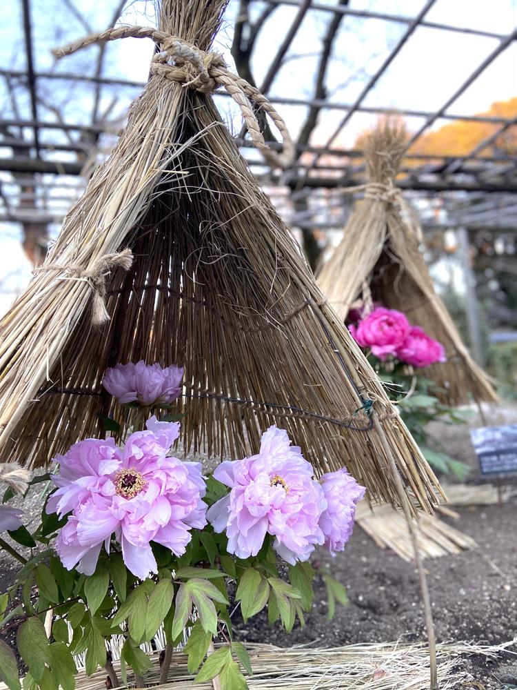 都内でプチ旅行気分♪江戸の風情溢れる上野東照宮で初詣!_7