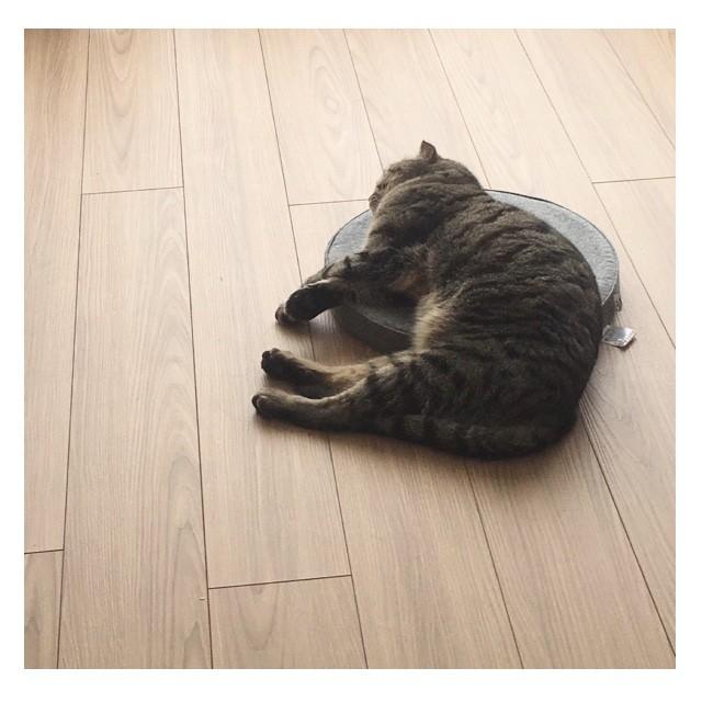【エディターのおうち私物#68】癒される!「気持ちよさそうな熟睡猫」_3