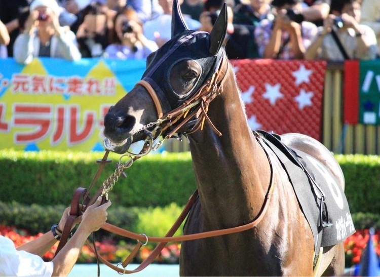 【週末お出かけ】有馬記念まであと6日!アナタもUMAJOデビュー<前編>_9