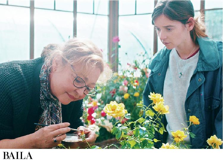 美しいバラの花々にも癒される『ローズメイカー 奇跡のバラ』
