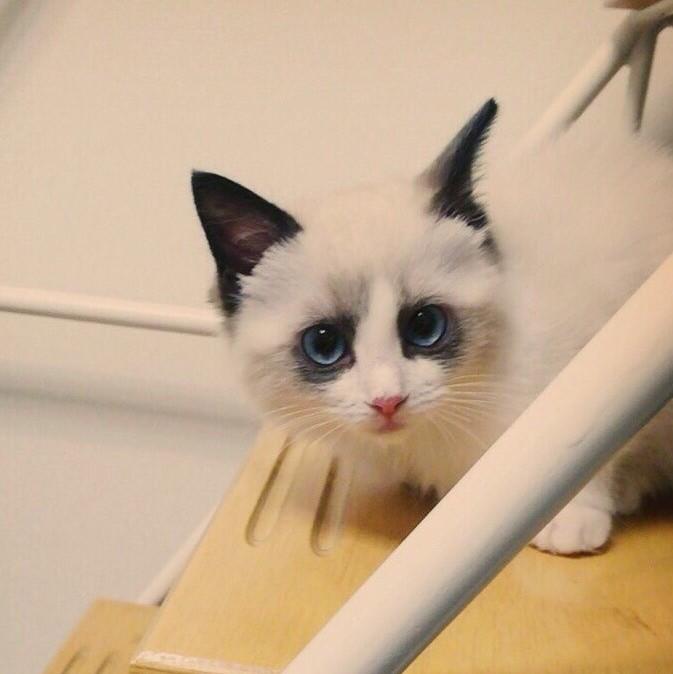 ライター道端舞子さんの愛猫 幼少期