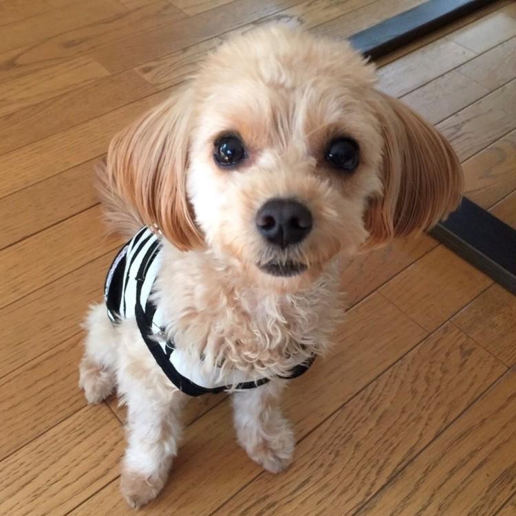 バイラ編集長Yの愛犬