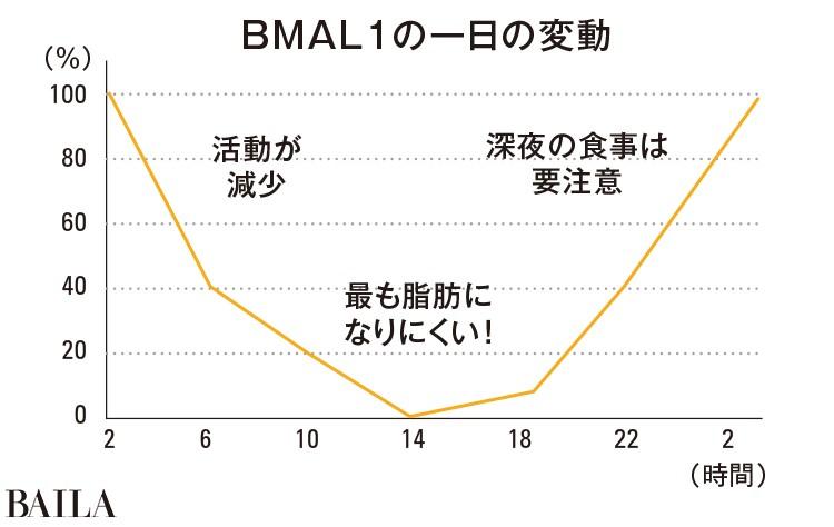 脂肪を増やすBMAL1(ビーマルワン)遺伝子の活動が高まるから