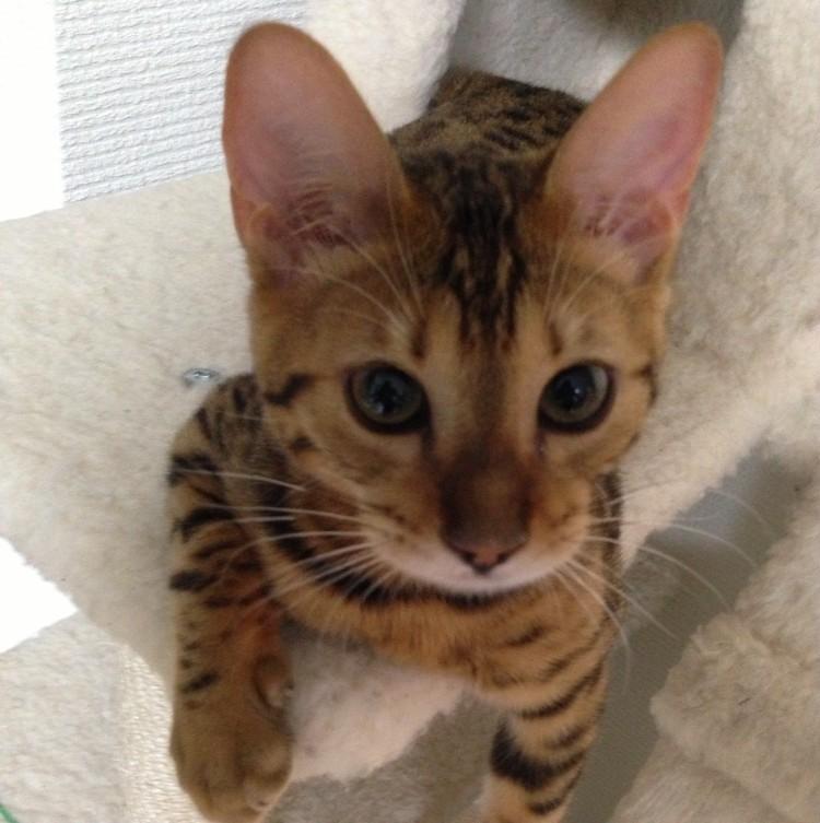 宮田聡子さんの愛猫 幼少期