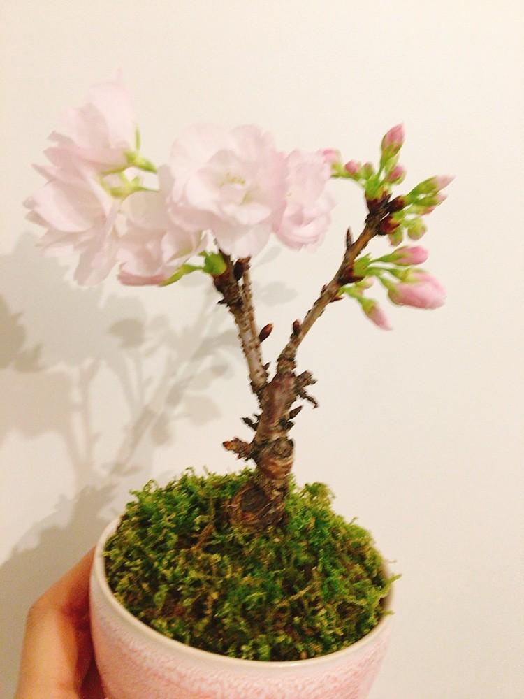 春コーデを楽しむ。_5