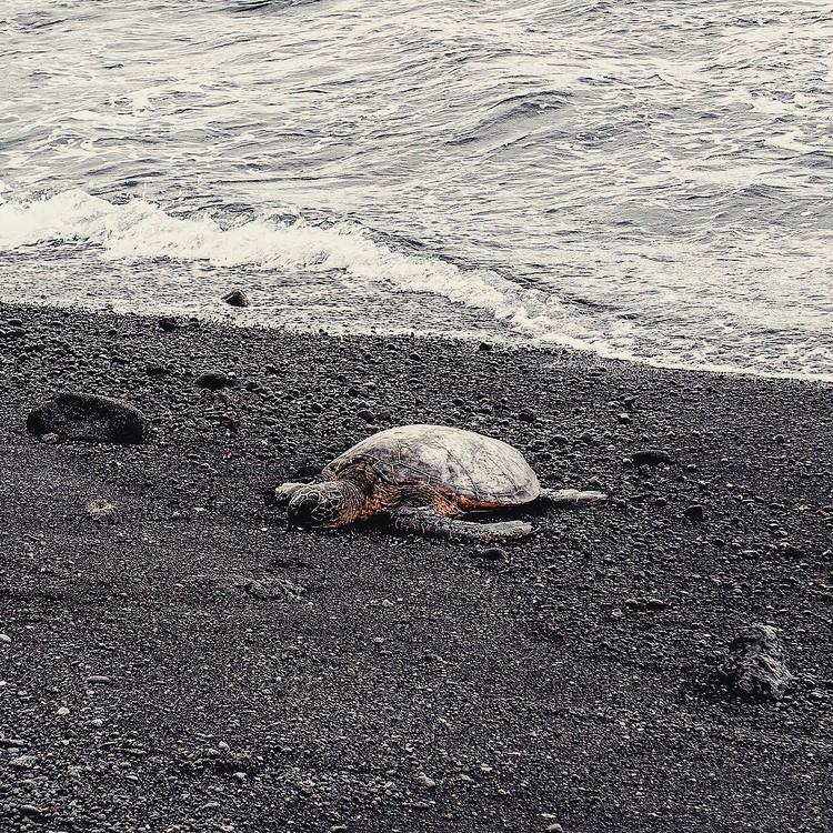 大自然の中で最高の星空が!【ハワイ島編②】_6