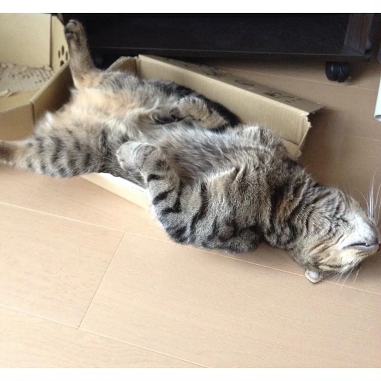寝相の悪い猫