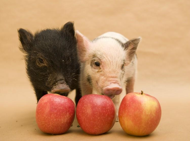 3月1日は豚の日!? セレブの豚さん&セレブな豚さんをご紹介_1