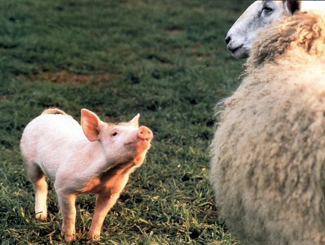 3月1日は豚の日!? セレブの豚さん&セレブな豚さんをご紹介_2