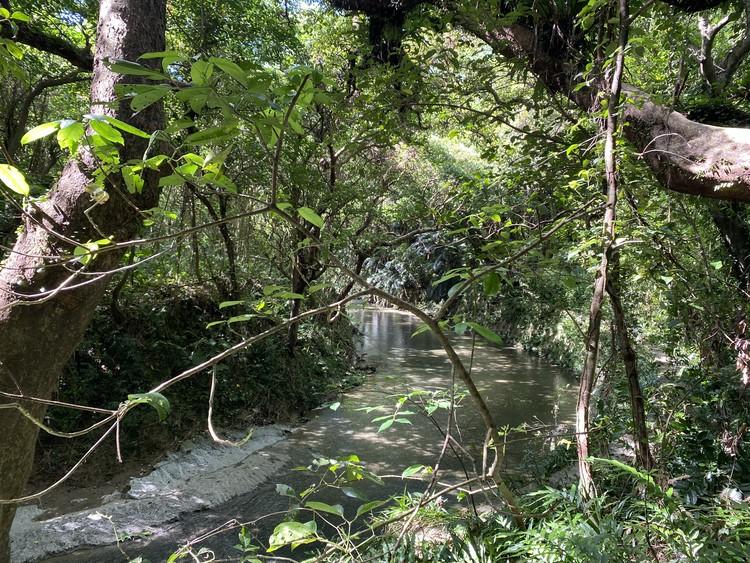 【沖縄旅行記②】唯一の観光は、ガンガラーの谷へ。_2