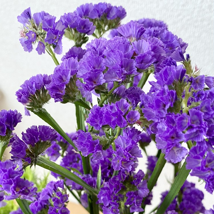 【エディターのおうち私物#10】お花を飾る→ドライフラワー→ギフトに! コロナ自粛疲れをトリプルで癒すフラワーパワー♡_14