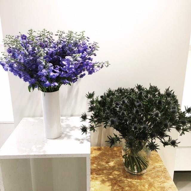 ファッション業界でいま大人気!【ディリジェンスパーラー】の花に注目!_5