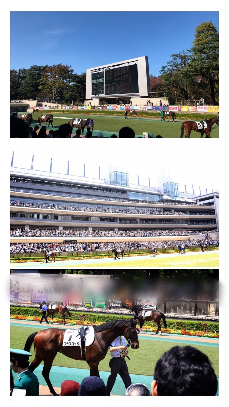【週末お出かけ】有馬記念まであと3日!アナタもUMAJOデビュー<後編>_1