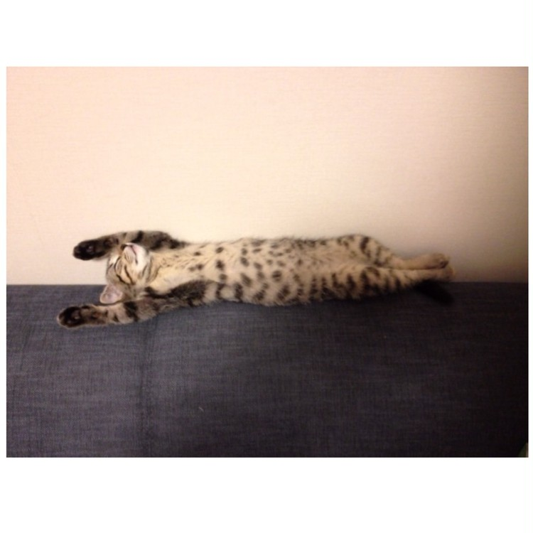 <写真>寝相のクセが強い、我が家の猫_3