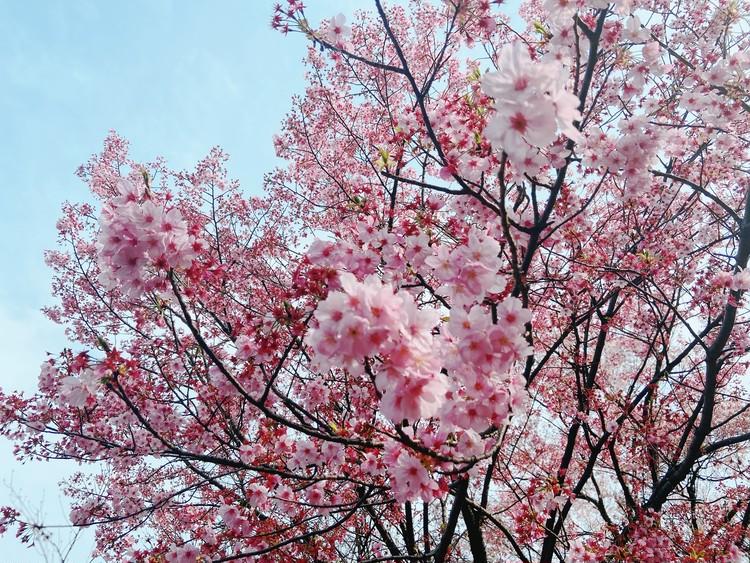 【大人のスニーカーコーデ】足元を白に変えて春気分に♡_1