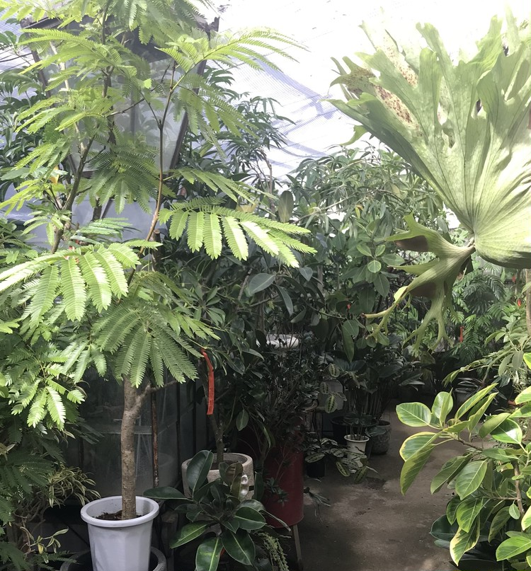お気に入りの植物が見つかる♡SOLSO FARMへ!_2_2